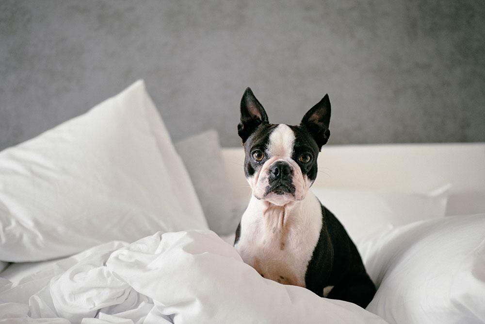 Hagamos de nuestro hogar un lugar seguro para cachorros - MascotaMarket.com