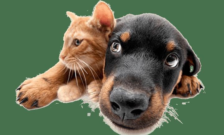 Comida para perro y gato Mascota Market