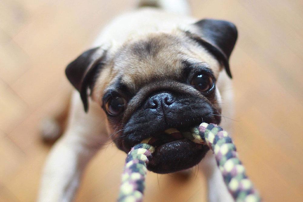 importancia del juego en mascotas