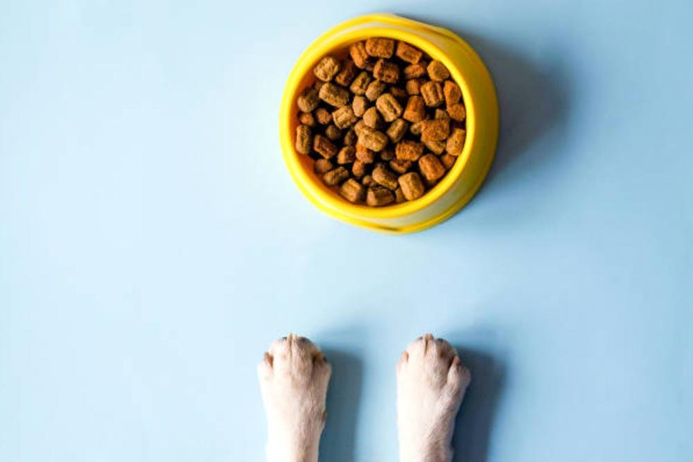 Comida para perros marcas