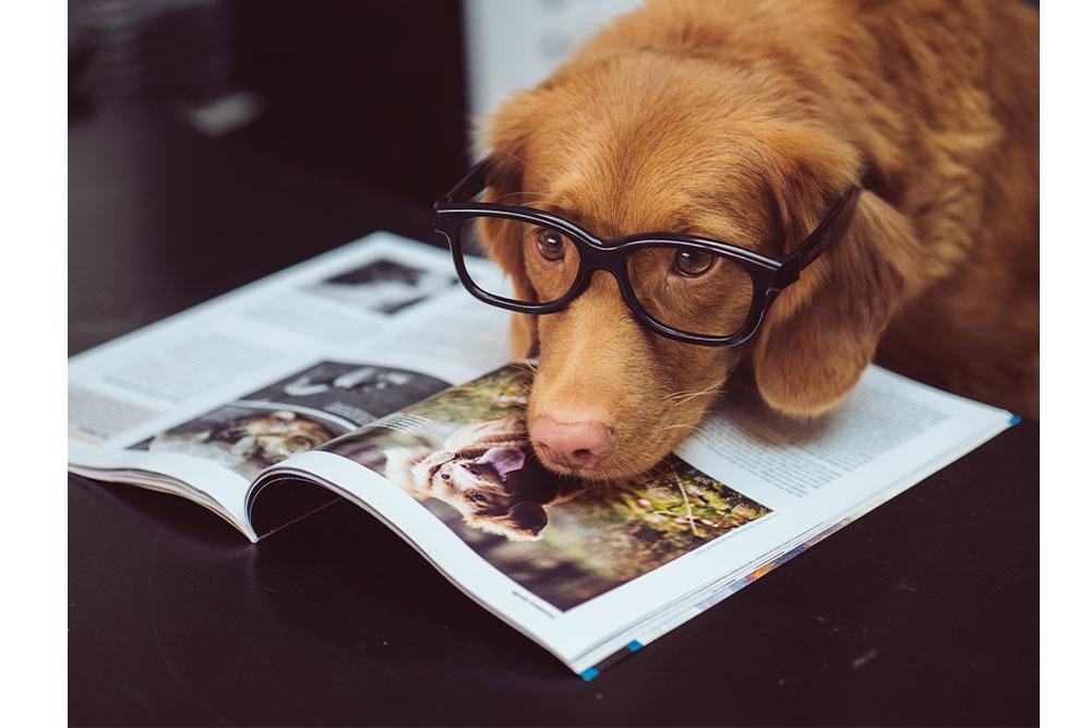 Errores al adiestrar a perros