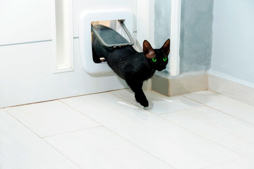 Puerta para gato